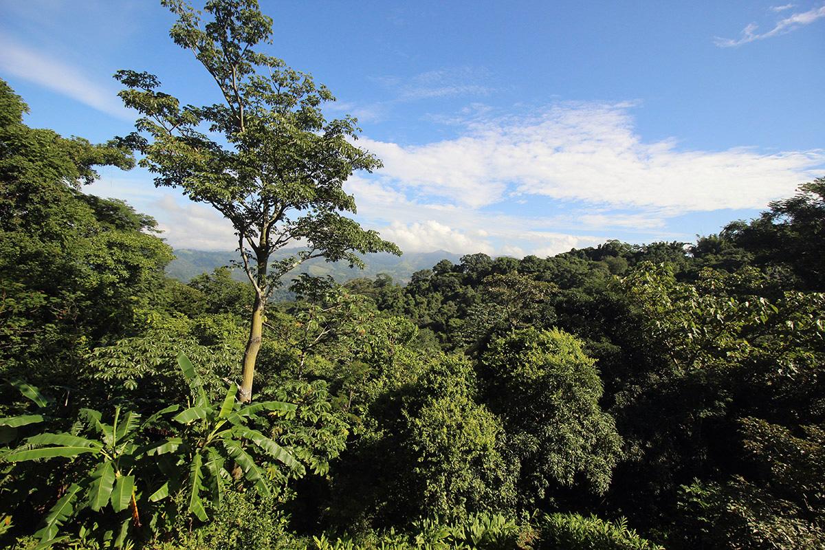 Costa Rica Yoga Center Studio in Nature Setting