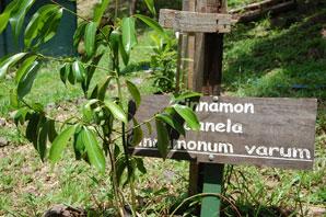 hotel's organic gardens